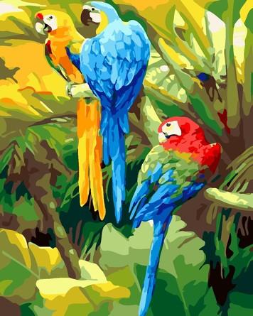 Раскраска по номерам. Три попугая Color Kit