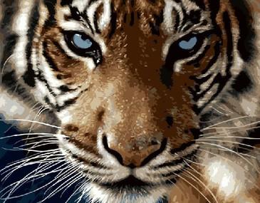 Картина по номерам на подрамнике. Взгляд тигра ВанГогВоМне