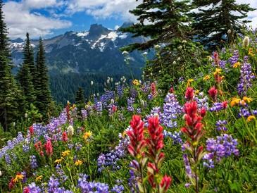 Картина по номерам на подрамнике. Цветы в лесу ВанГогВоМне